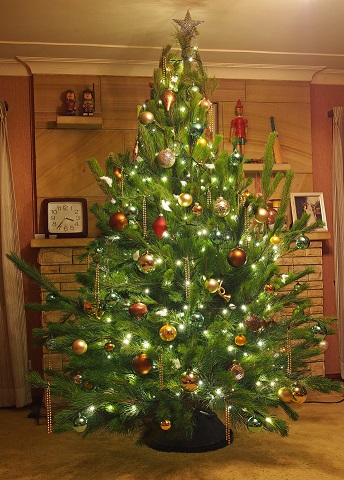 live christmas tree mid sized 8 foot golden lustre and champagne decorations - Real Christmas Tree Decorated